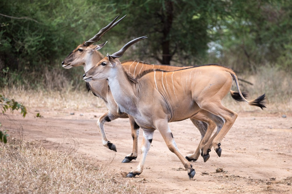 """ตามหา """"ซิมบา"""" ในป่ามาลาวี (ตอนที่ 2)"""