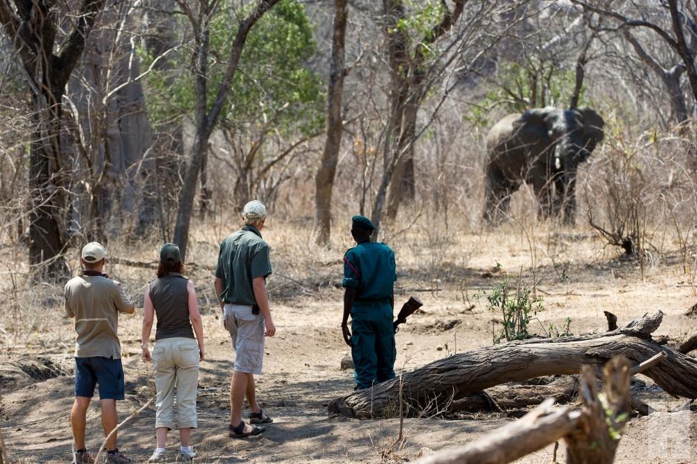 Walking Safari ที่มาลาวี เปิดตาให้กว้างปิดปากให้สนิท