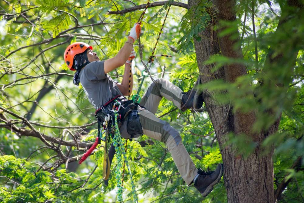 """บิ๊กทรีชวนบอกรักต้นไม้ในงาน """"เทศกาลต้นไม้ใหญ่ ครั้งที่ 3"""""""